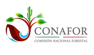 Dialoga director general de conafor con ind genas de for Viveros forestales conafor