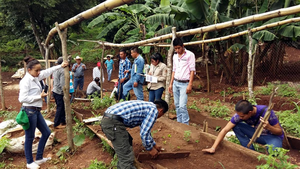 Productores de c fe de m s de 300 viveros se capacitan for Construccion de viveros
