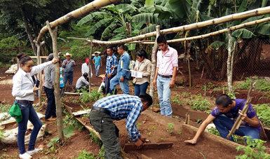 Productores de c fe de m s de 300 viveros se capacitan for Vivero de cafe pdf