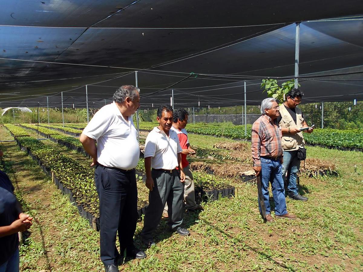 Oaxaca en la costa supervisa cdi proyectos productivos for Viveros en oaxaca