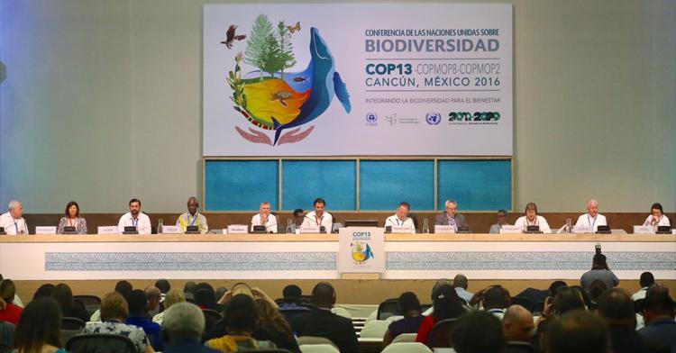 Ministros de medio ambiente de más de 140 países suscribieron la Declaración de Cancún