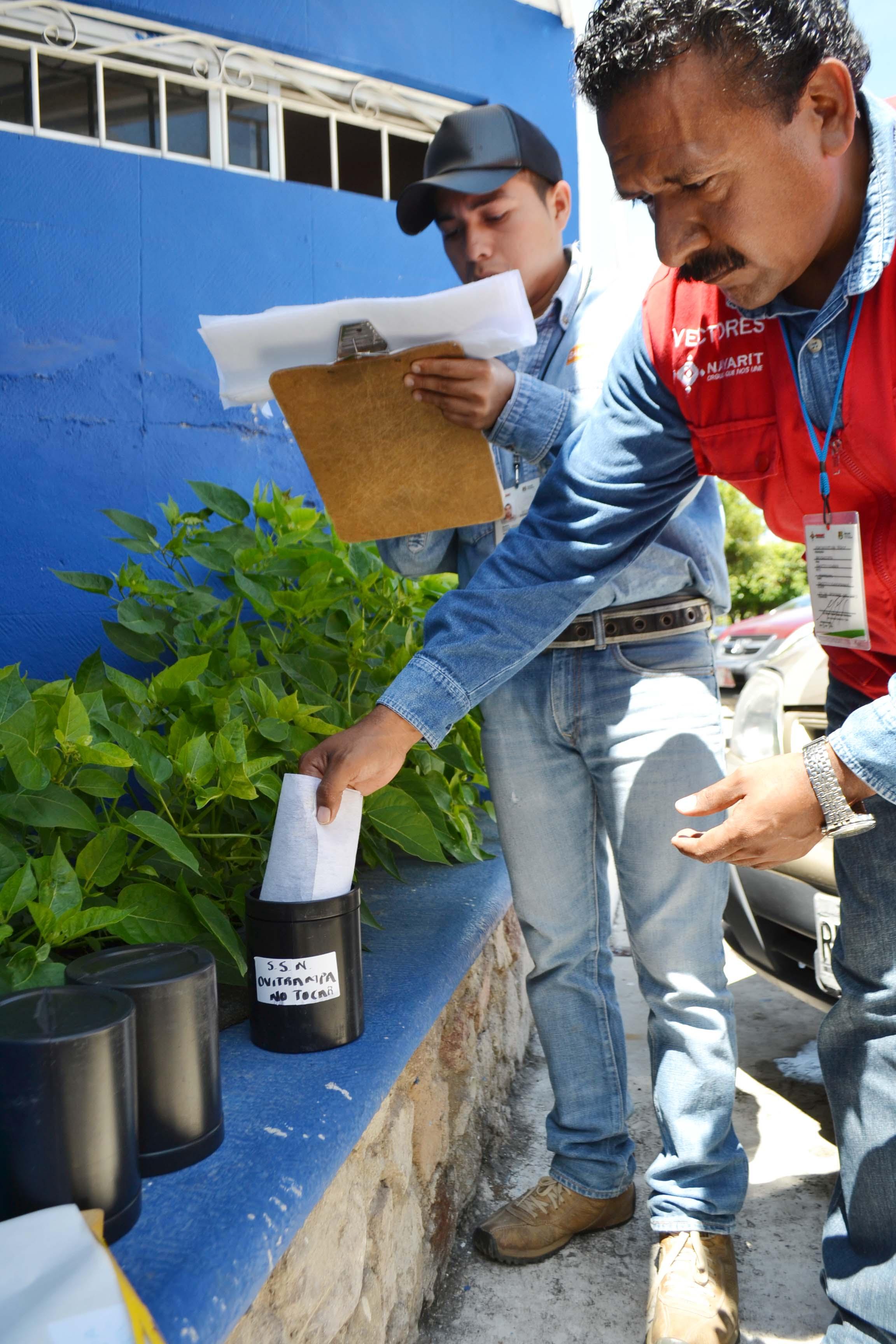 Programa Manzana Libre sin Dengue, en el estado de Nayarit