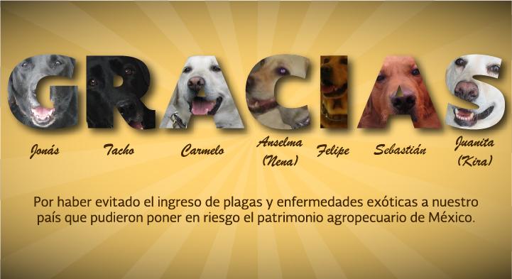 Equipo Canino