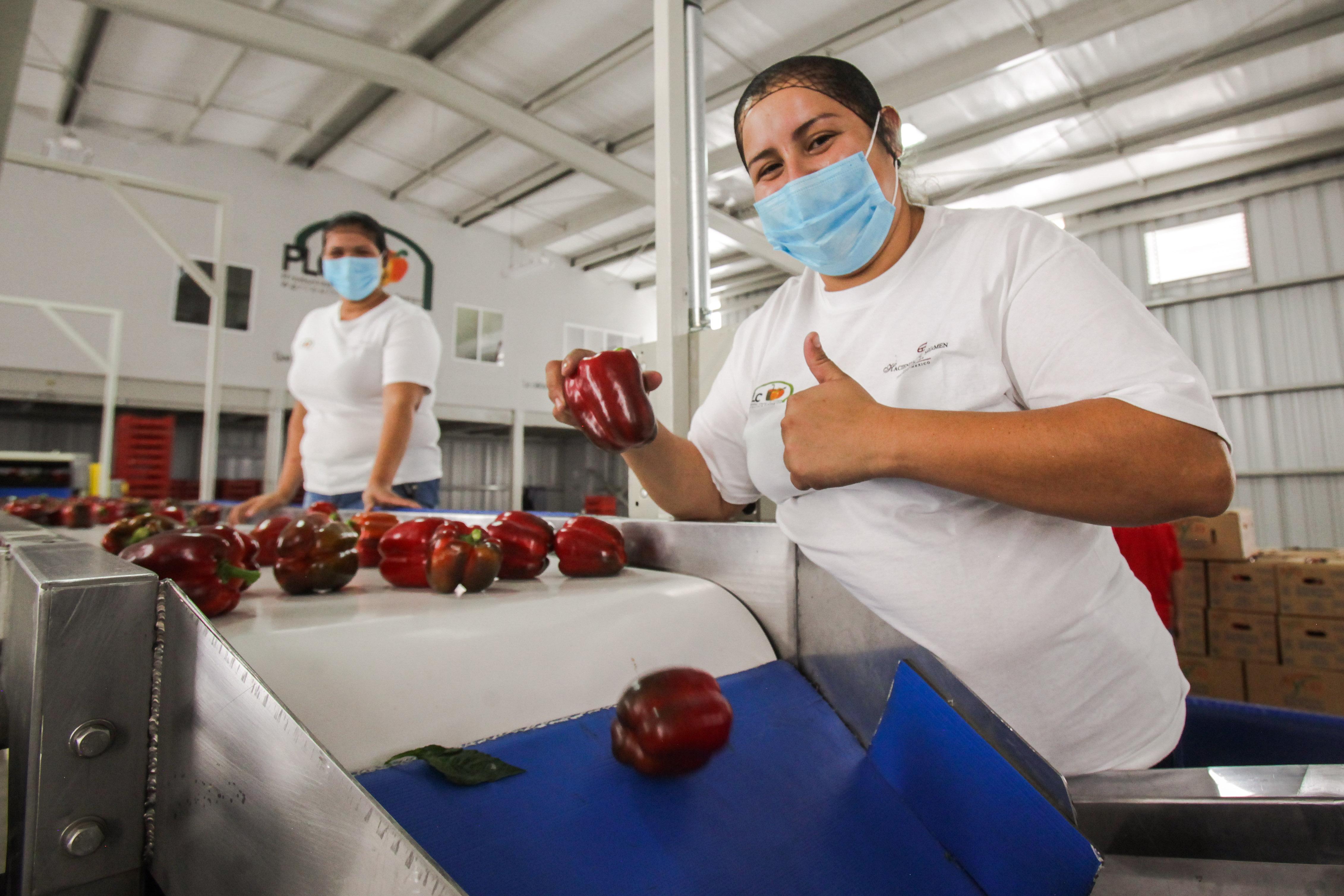 Este año las exportaciones agroalimentarias superaron los  23 mil 662 millones de dólares, un incremento a tasa anual de 6.5 por ciento: SAGARPA