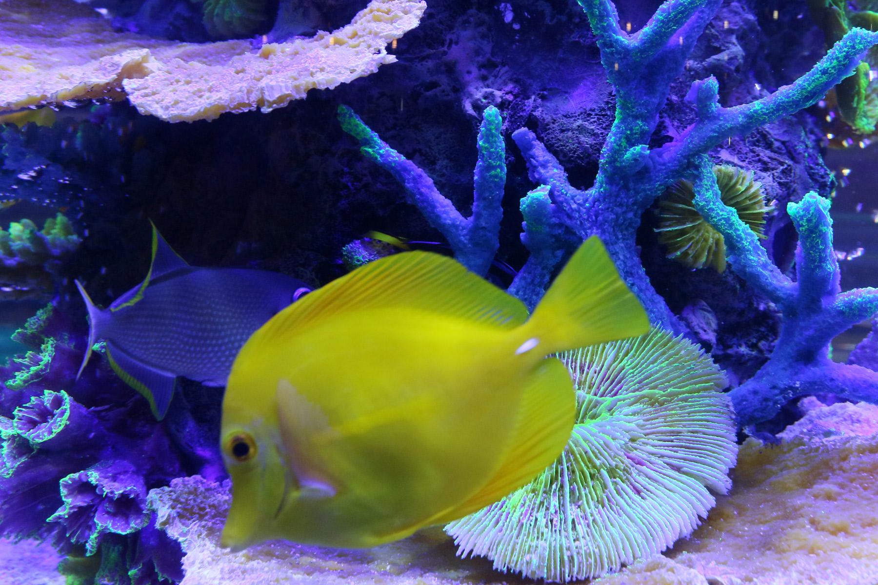 Peces ornamentales un negocio con amplias perspectivas de for Granja de peces ornamentales