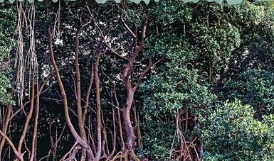 bp220_manglares_libro2015_020217